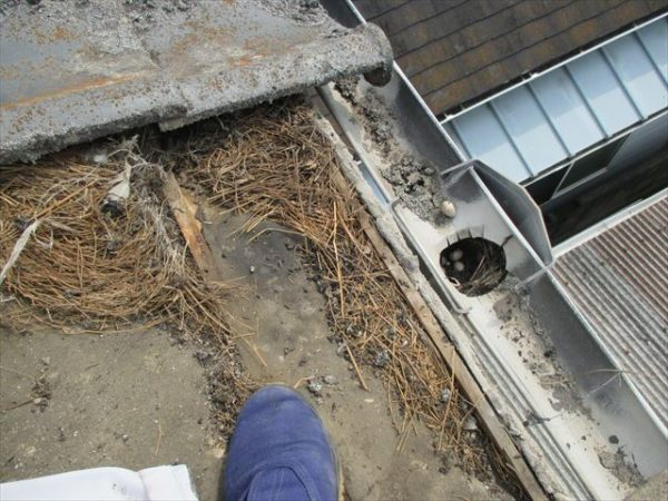 岡山市南区で屋根工事 雨漏り修理 雨どい補修