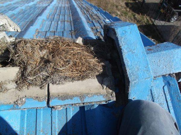 岡山市南区で屋根工事 雨漏り修理 棟瓦の下に鳥の巣