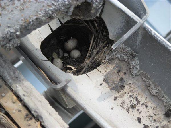岡山市南区で屋根工事 雨漏り修理 雨どい補修 上合に鳥の巣